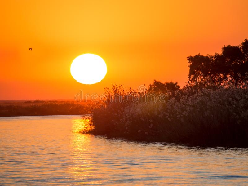 Beau coucher du soleil africain orange rouge au-dessus de rivière de Chobe au parc national de rivière de Chobe, Botswana, Afriqu images libres de droits