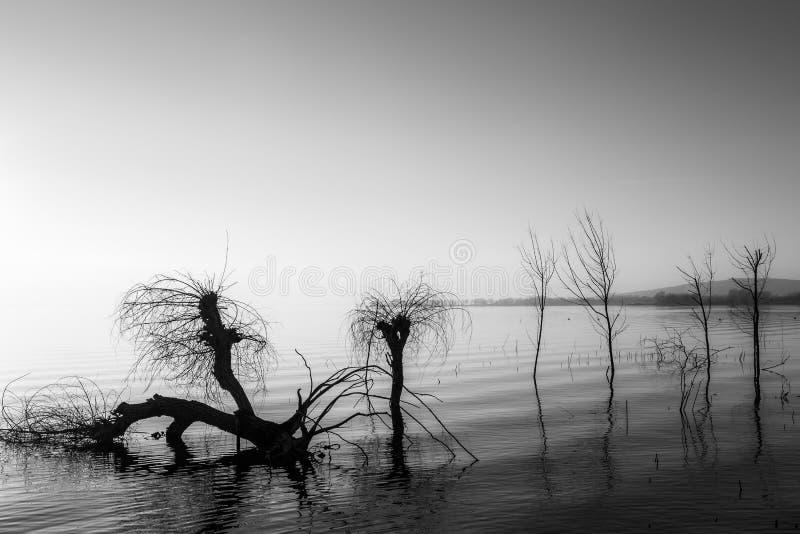 Beau coucher du soleil au lac Ombrie Trasimeno, avec l'eau parfaitement immobile et les arbres squelettiques photographie stock libre de droits