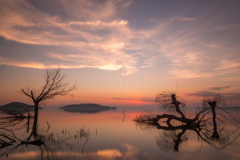 Beau coucher du soleil au lac Ombrie Trasimeno, avec l'eau parfaitement immobile, les arbres squelettiques et les belles couleurs photos libres de droits