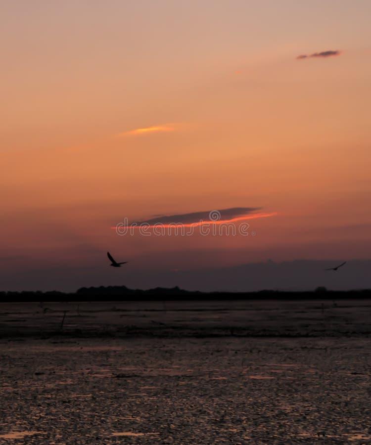 Beau coucher du soleil avec des nuages avec des oiseaux de côté positif et de vol images stock