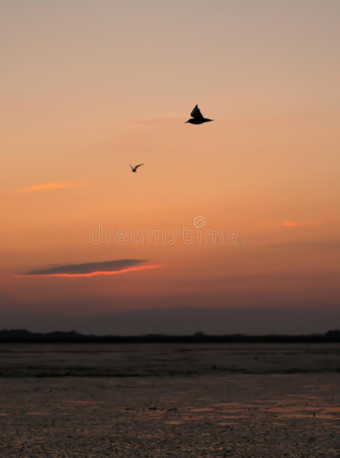 Beau coucher du soleil avec des oiseaux volant dans le ciel et le côté positif image libre de droits