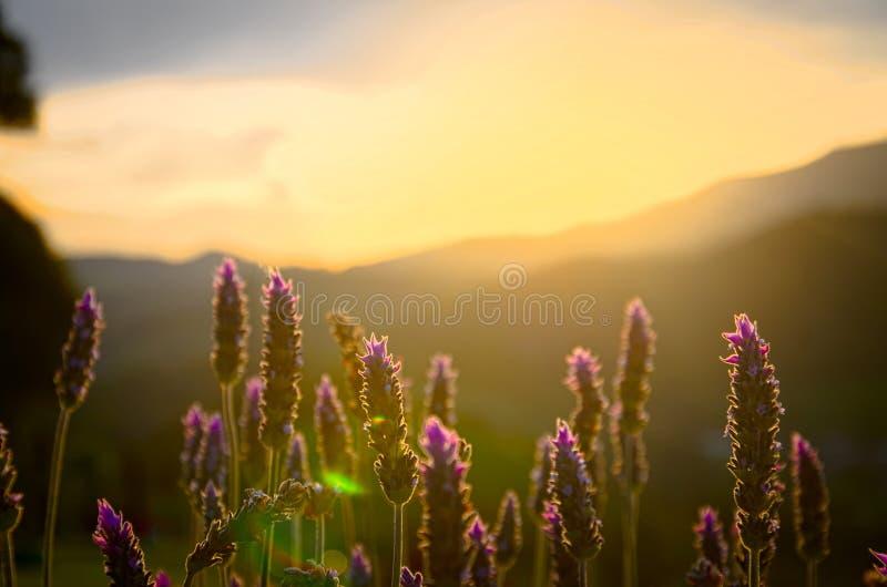 Beau coucher du soleil avec des usines dans l'avant image libre de droits