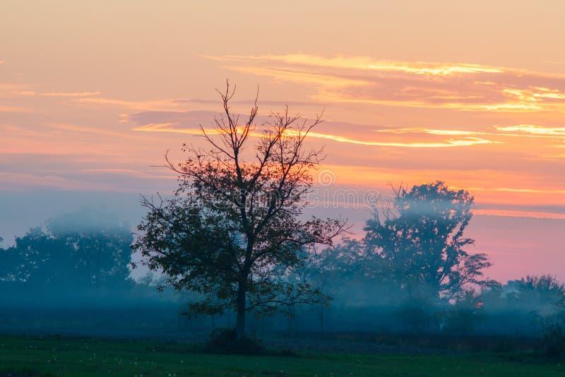 Beau coucher du soleil avec le ciel orange et rouge Arbre et brume dans classés photographie stock