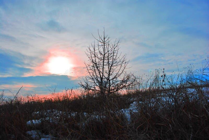 Beau coucher du soleil, ciel bleu-rose avec le soleil d'or, silhouette noire d'arbre sur la colline neigeuse photos libres de droits
