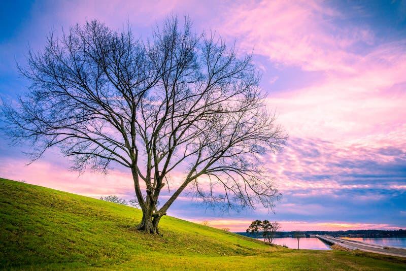 Beau coucher du soleil d'arbre images libres de droits