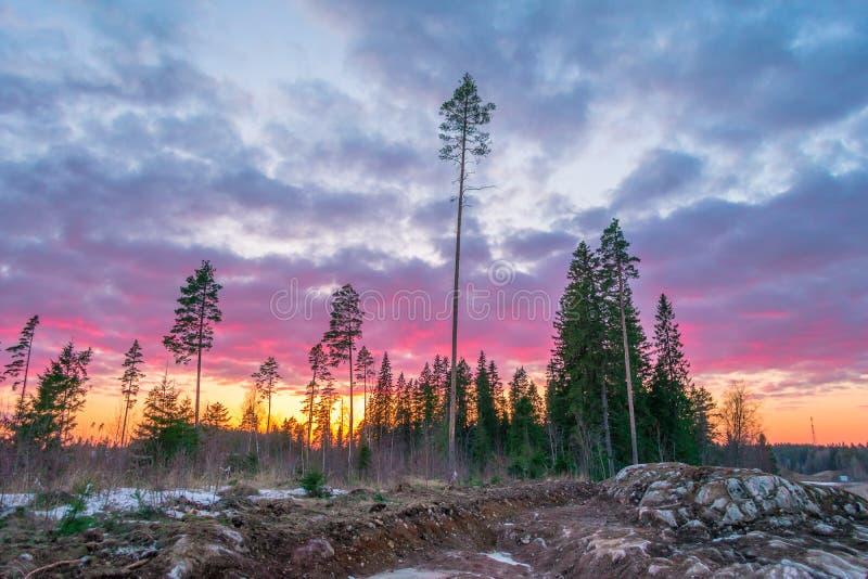 Beau coucher du soleil orange rouge dans le ciel au-dessus des falaises des montagnes et des pins grands, nuages pittoresques ill photo libre de droits