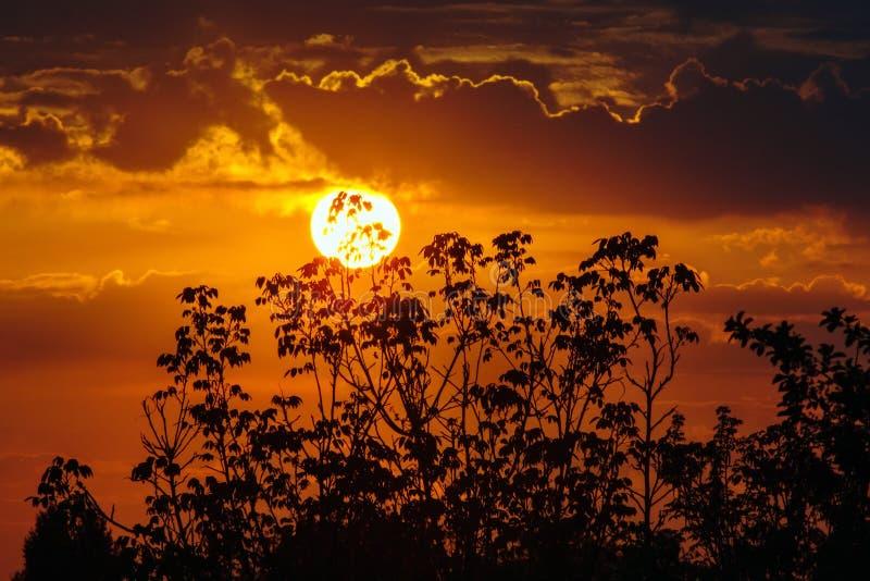 Beau coucher du soleil par les arbres image libre de droits