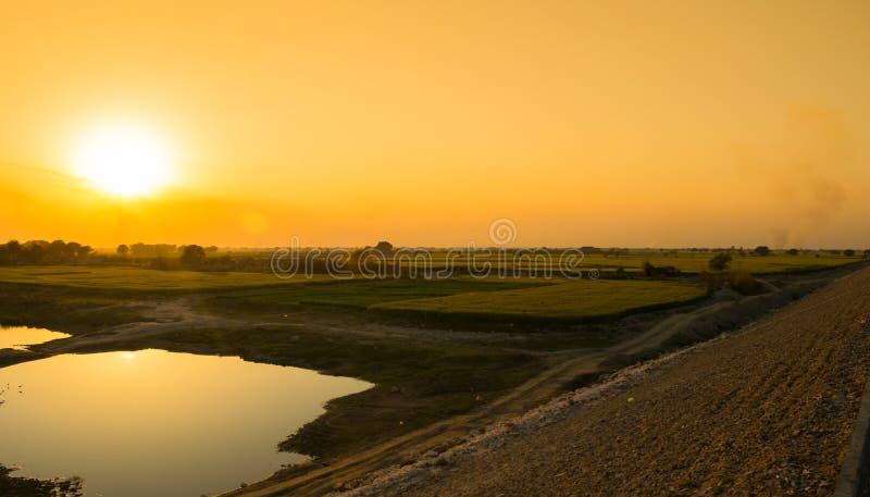 Beau coucher du soleil sur des champs de blé verts et un petit lac photo libre de droits