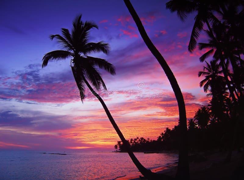 Beau coucher du soleil tropical photo stock