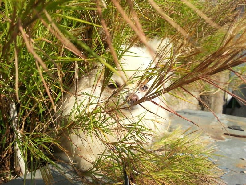 Download Beau détendez le chien image stock. Image du crabot, temps - 56481097