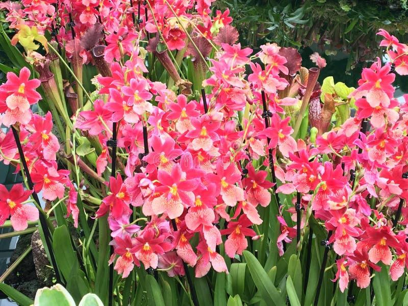 Beau dôme de fleur d'orchidées image libre de droits