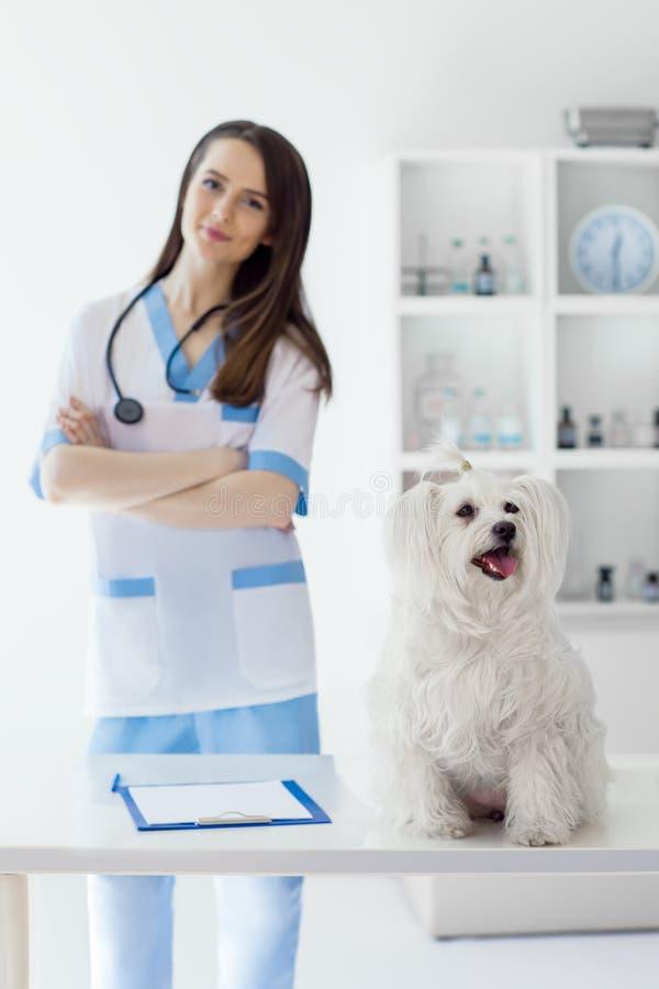 Beau docteur vétérinaire de sourire et chien blanc mignon dans le vétérinaire image libre de droits