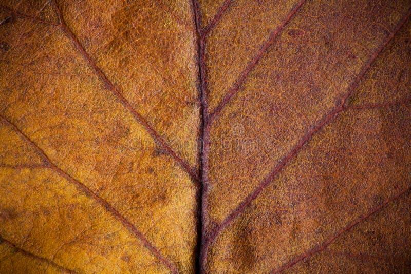 Beau feuillage d'automne photos libres de droits