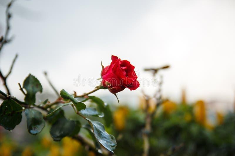 Beau, fleur, feuilles, pluie photographie stock