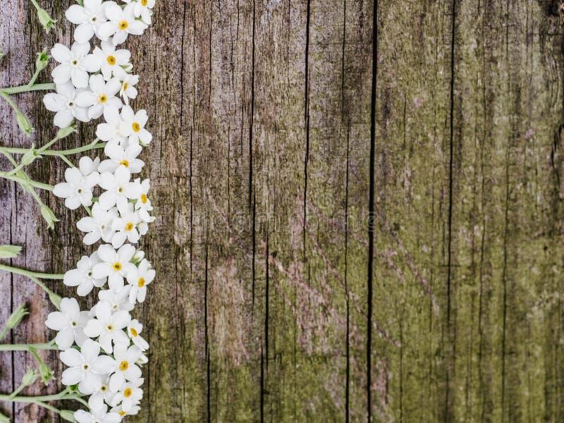 Beau, fleurs de ressort se trouvant sur les conseils minables images stock