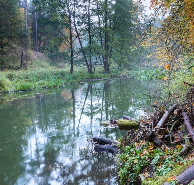 Beau fleuve dans la forêt photo libre de droits