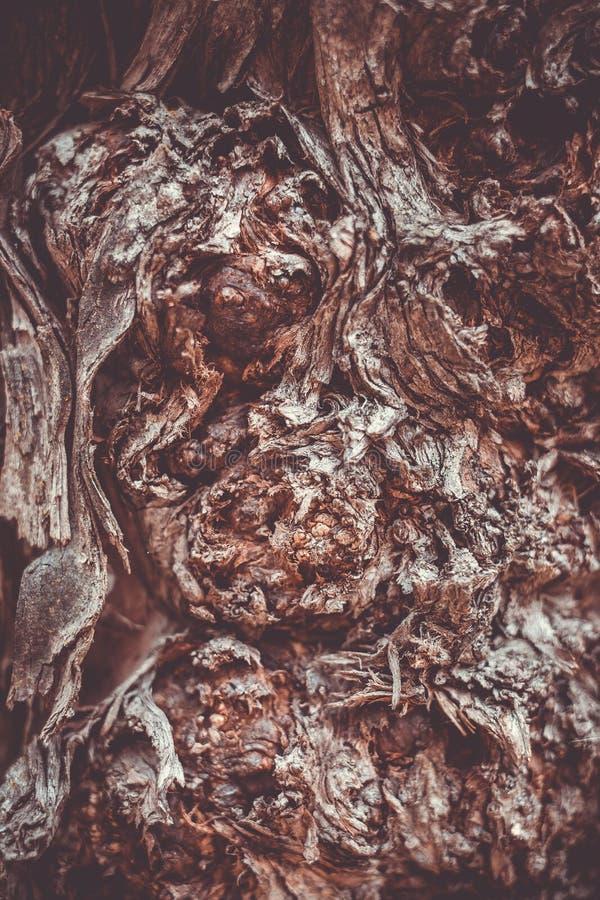 Beau fond brun de photographie d'?corce d'arbre macro image stock