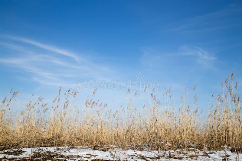 Beau fond de ciel en steppe d'hiver images stock