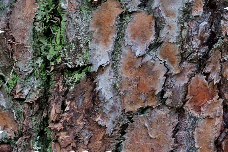 Beau fond de couleurs différentes de l'écorce d'une fin d'arbre  photos stock