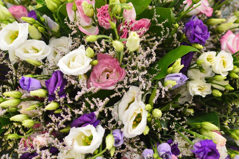 Beau fond de fleur photographie stock libre de droits