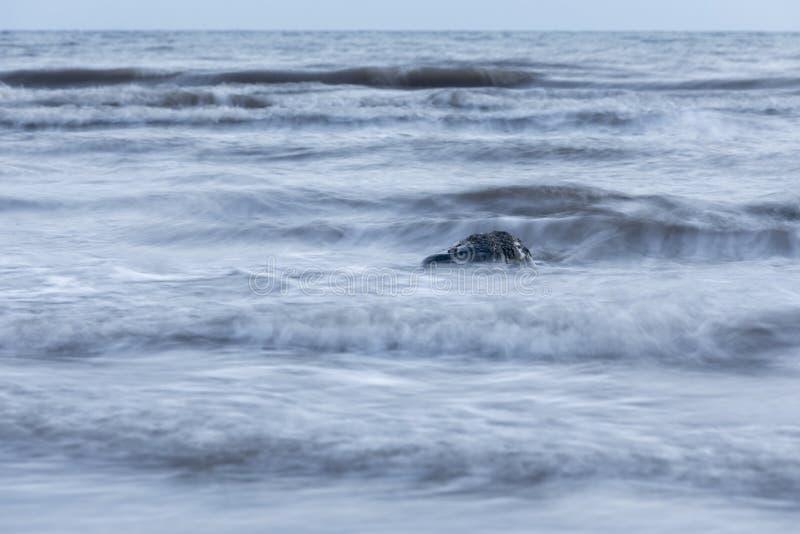 Beau fond de paysage marin, roche en mer d'Irlande chez Seascale, images stock