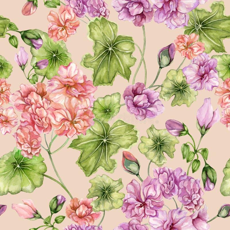 Beau fond floral avec des fleurs et des feuilles de pélargonium Modèle coloré en pastel botanique sans couture Peinture d'aquarel illustration stock