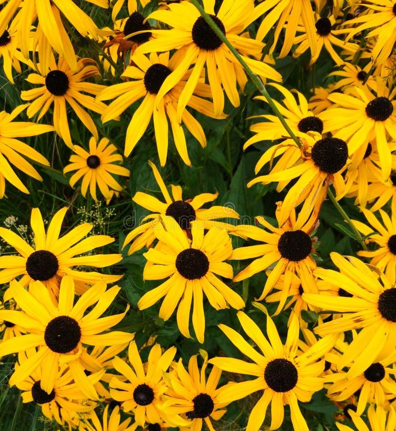 Beau fond ou texture lumineux de tournesol de fleur image stock