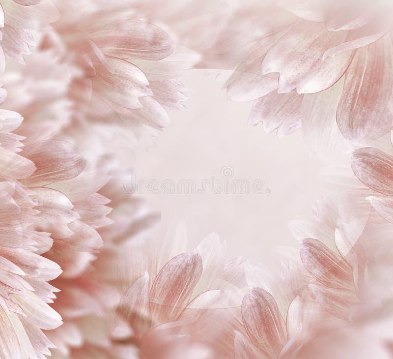 Beau fond rouge-clair floral Fleurs et p?tales d'un dahlia blanc-rouge Plan rapproch? Composition de fleur Carte de voeux pour images stock