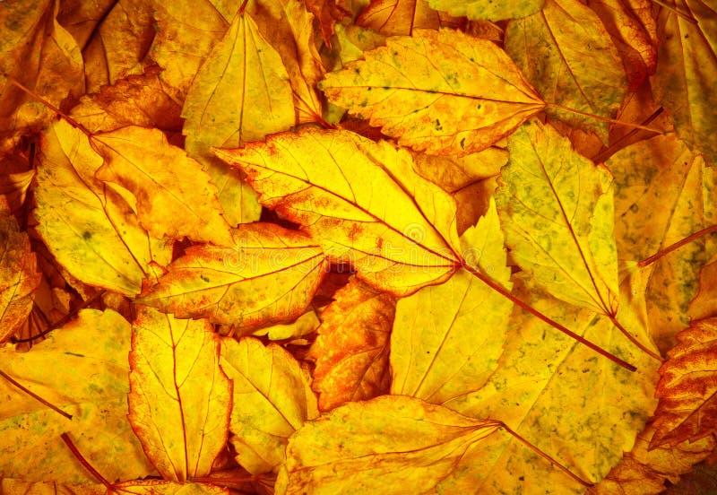 Beau fond tombé de feuilles d'automne photographie stock