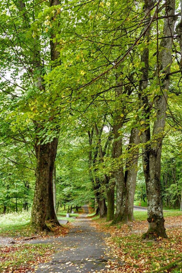 Beau Forest In Spring Season vert Route de campagne, chemin, manière, ruelle, voie sur Sunny Day image libre de droits