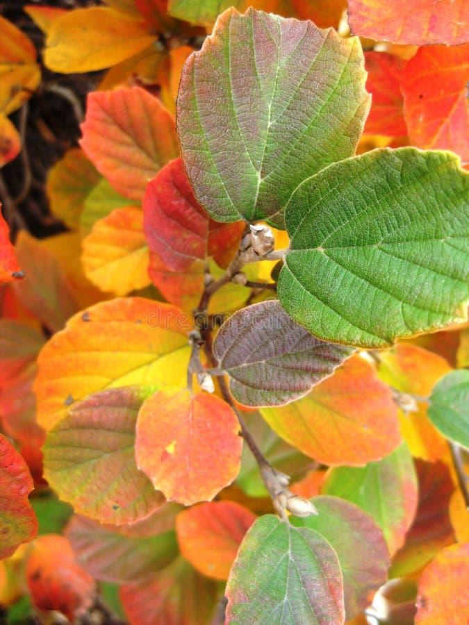 Beau Fotherfilla en automne images stock