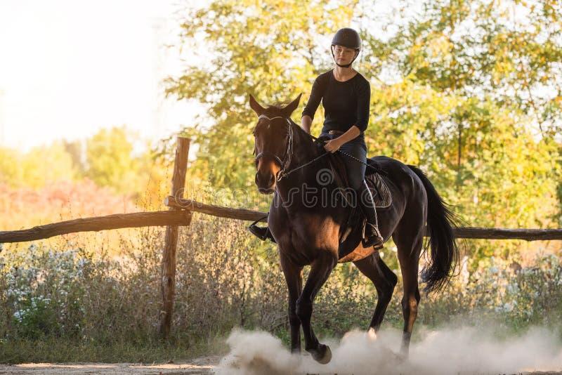 Beau galop Arabe de course de cheval dans le domaine de fleur image stock
