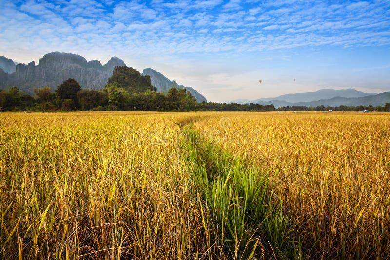 Beau gisement d'or et vert de riz avec la montagne dans Vang Vieng, Laos. image libre de droits