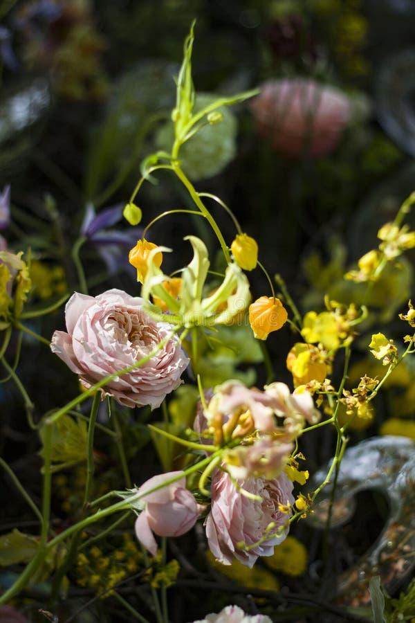 Beau grand plan rapproch? de roses sur un fond brouill? photo stock
