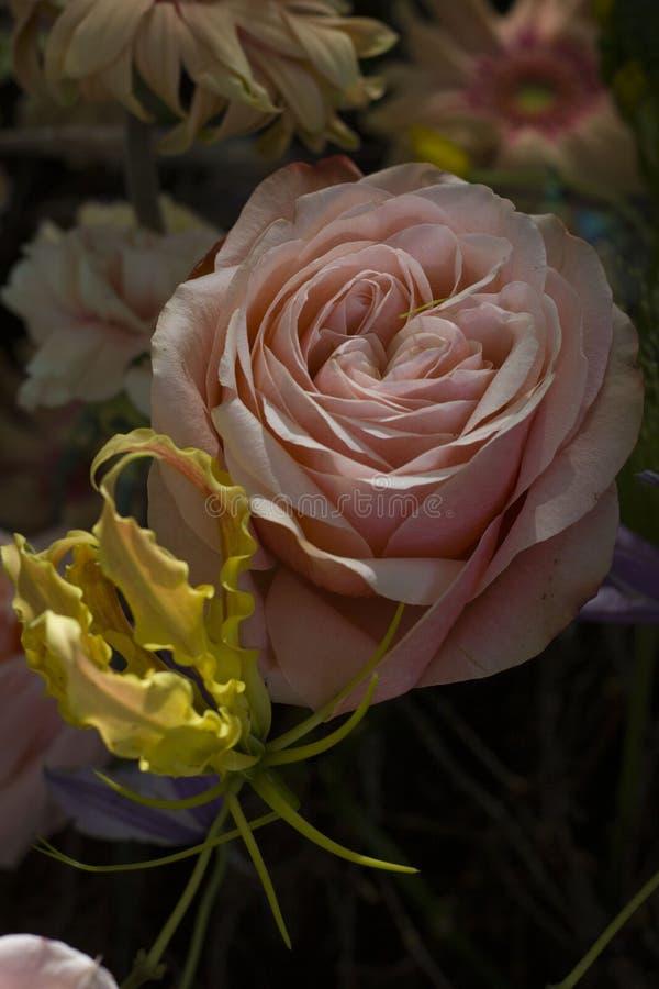 Beau grand plan rapproch? de roses sur un fond brouill? photographie stock