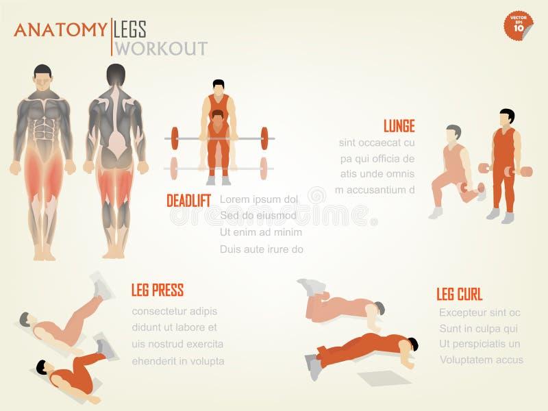 Beau graphique des informations sur la conception de séance d'entraînement abdominale de jambes illustration stock