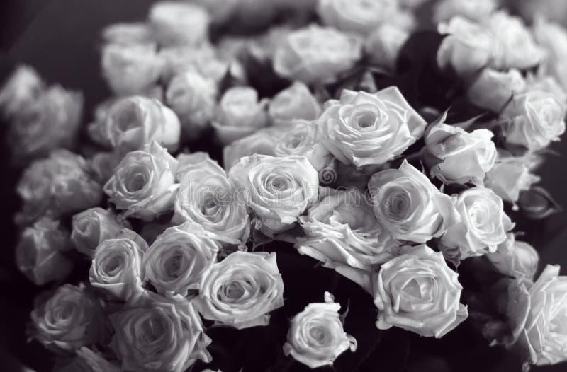 Beau groupe de roses noires et blanches étroites vers le haut de l'image image libre de droits