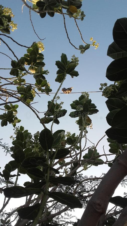 Beau hibou dans naturel photo stock