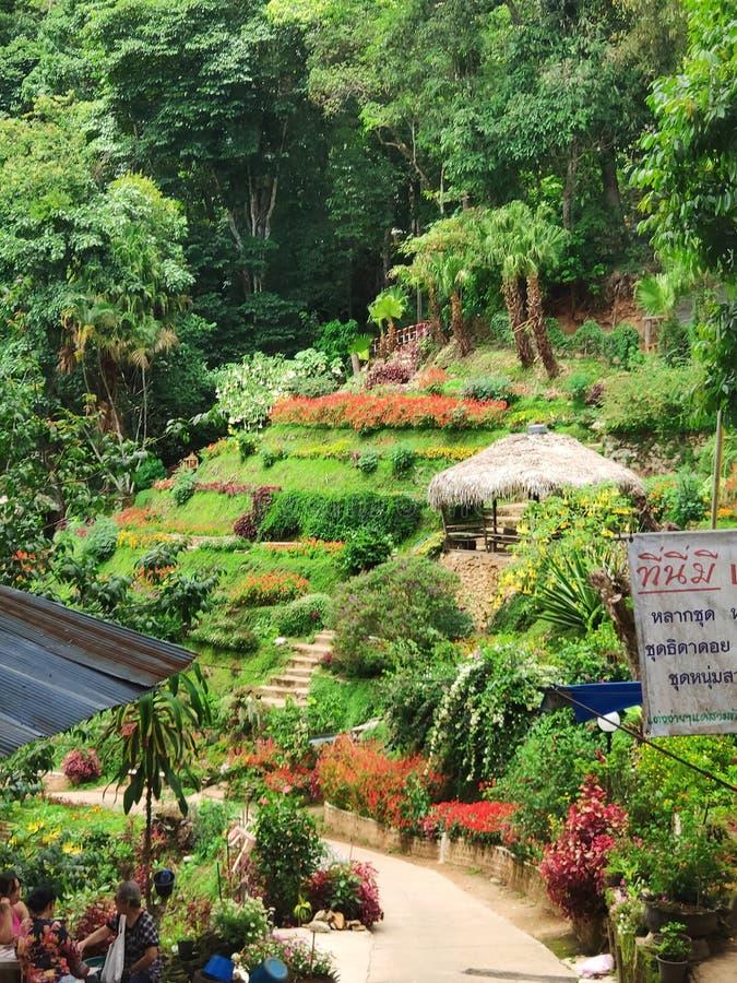 Beau jardin à Hmong Village Nord de la Thaïlande photo stock