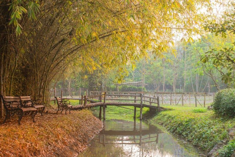 Beau jardin avec des bancs dans l'arbre d'automne au parc public image stock