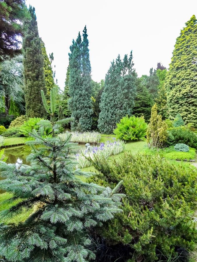 Beau jardin avec des conifères et un étang image libre de droits