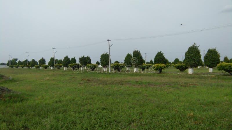 Beau jardin d'herbe verte images stock