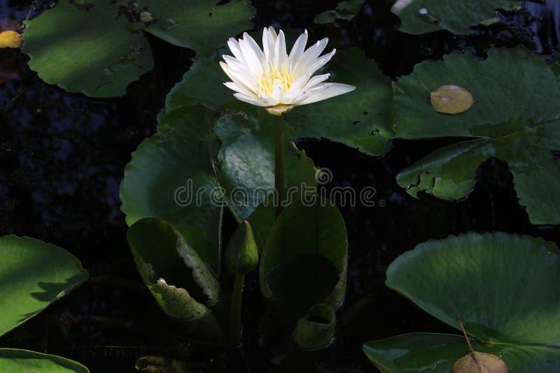 Beau jardin de fleur image libre de droits