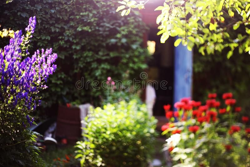 Beau jardin formel avec la grange schabby de lierre de vintage sur le fond photo stock