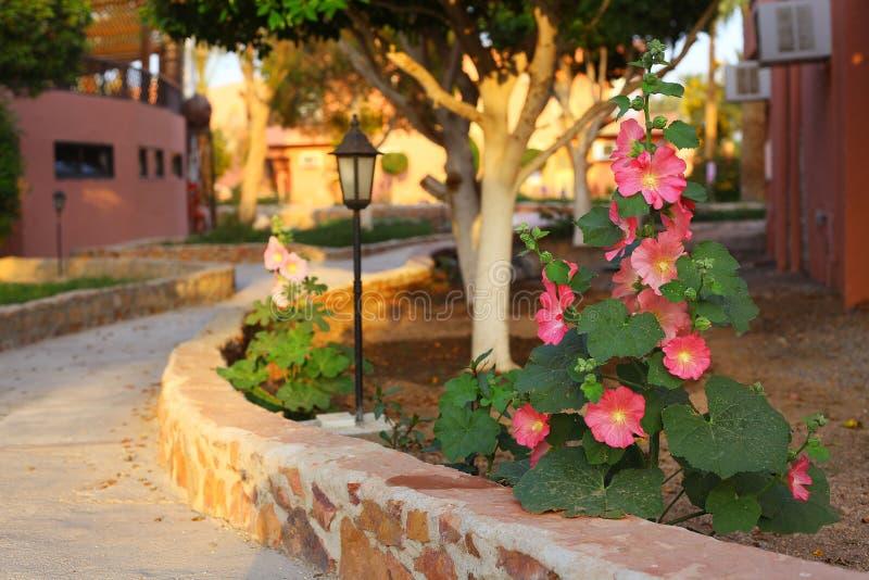 Beau jardin tropical avec les fleurs roses usine et le lig de rue image stock