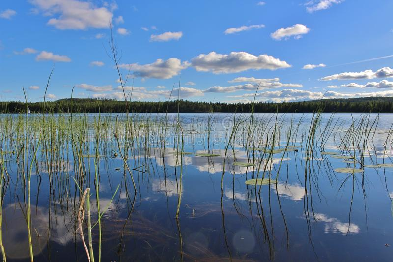 Beau jour d'été dans Norrbotten images libres de droits