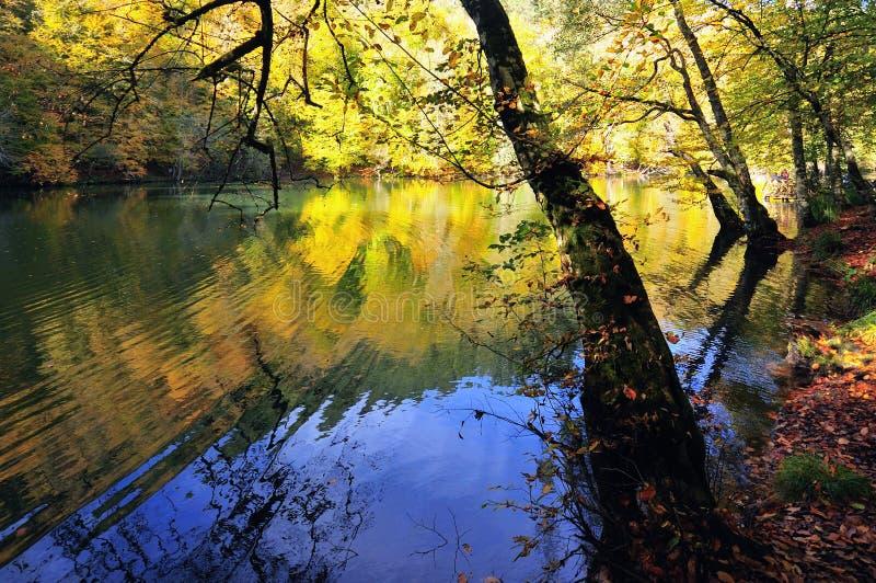 Beau lac automnal images libres de droits