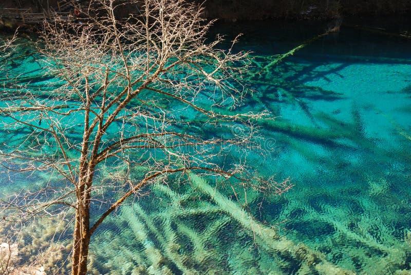 Beau lac avec l'arbre dans le jiuzhaigou photos stock