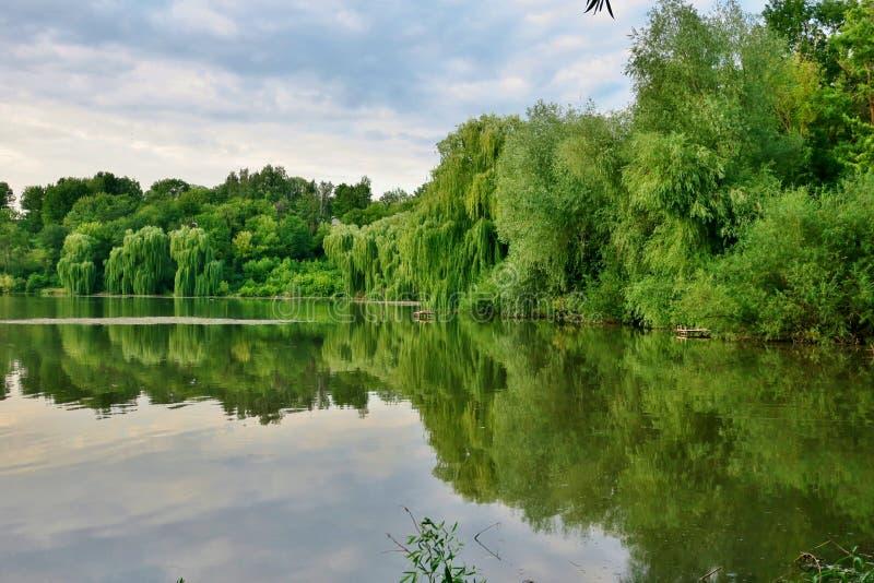 Beau lac avec les arbres verts dont les branches tombent dans l'eau images libres de droits