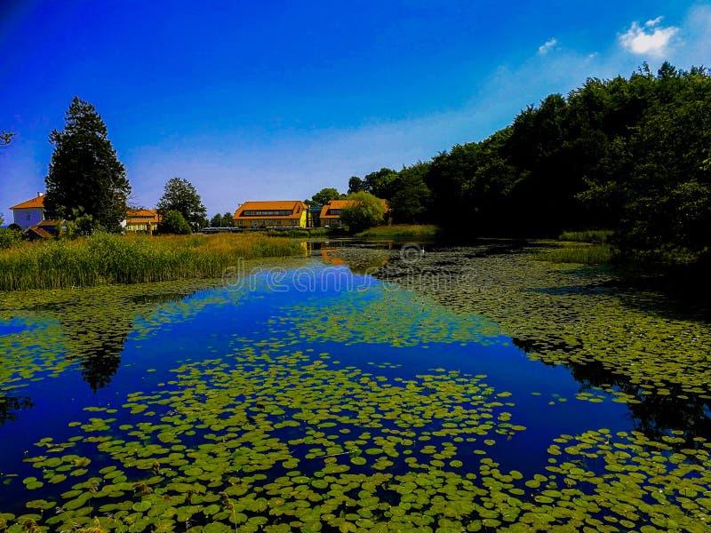 Beau lac avec un bon nombre d'anémones photos stock